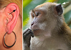 meaning of ear