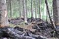 Degums pie Soročkas ezera, Mākoņkalna pagasts, Rēzeknes novads, Latvia - panoramio.jpg