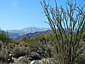 Desert and Snow, Living Desert 3-15 (16774159181).jpg