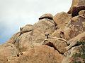 Desert bighorn sheep (Ovis canadensis nelsoni) ram; Desert Queen Ranch - 12489274984.jpg