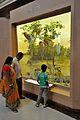 Diorama - Mangrove - Zoological Gallery - Indian Museum - Kolkata 2014-04-04 4386.JPG