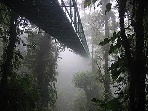 Monteverde - One of the many eco-tourism oriented suspension bridges in the area. (Selvatura Park)