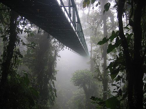 A canopy walkway disappearing into a cloud forest near Santa Elena, Costa Rica