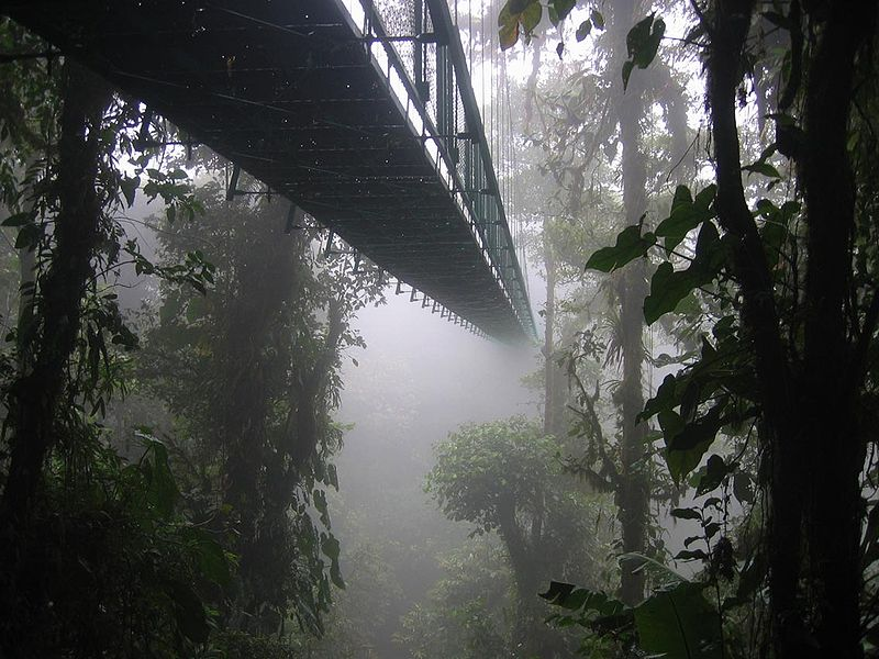 File:DirkvdM canopy walk.jpg