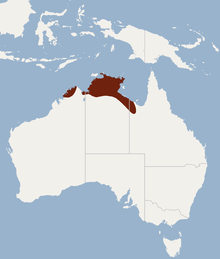 Distribution of Nyctophilus walkeri.png