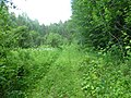 Dobryanskiy r-n, Permskiy kray, Russia - panoramio (249).jpg