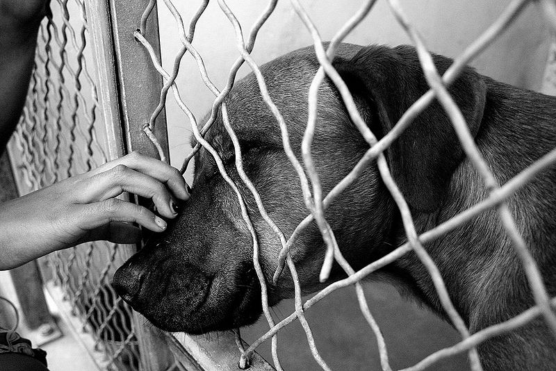 File:Dog at shelter.jpg
