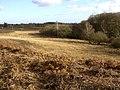 Dogwood Bottom, New Forest - geograph.org.uk - 111001.jpg