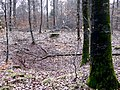Doline oder Erdfall - panoramio.jpg