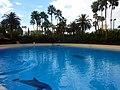 Dolphins (7981038543).jpg