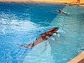 Dolphins (7981094727).jpg