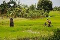 Donggongon Sabah Menhir-02.jpg