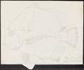 Drepane punctata - 1700-1880 - Print - Iconographia Zoologica - Special Collections University of Amsterdam - UBA01 IZ13100301.tif
