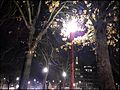 Effet de la pollution lumineuse sur l'arbre urbain Effect of light pollution on urban trees and dead leaves 06.jpg