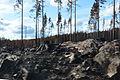 Efter skogsbrand norr om vägen Ängelsberg Hästbäck.JPG