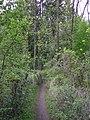 Ein niedriger Wald - panoramio.jpg