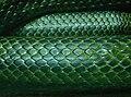 Elaphe climacophora Ile aux Serpents 201108 2.jpg