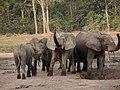 Elephants à Dzanga Baï.jpg