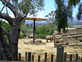 Elephants in Santa Barbara zoo.JPG