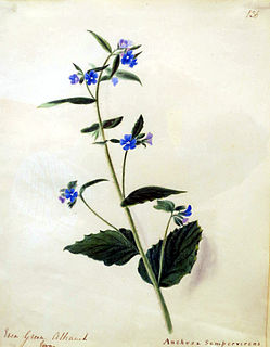 Emily Stackhouse Botanical artist 1811–1870