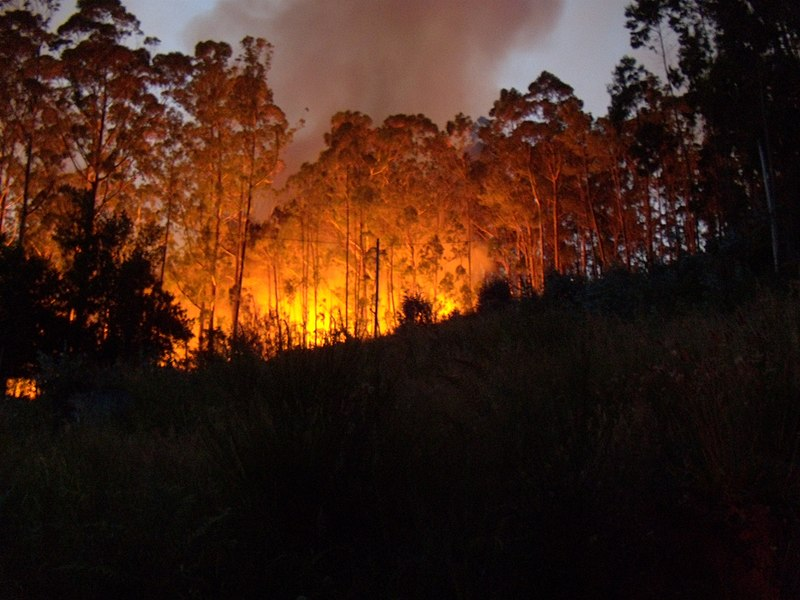 File:Eucalyptus forest fire, Madeira, Portugal, 3 July 2011 - panoramio.jpg