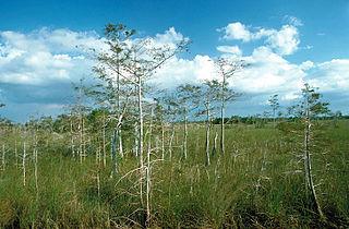 Die Everglades sind ein tropis