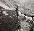 Excursion, sheep Fortepan 92184.jpg