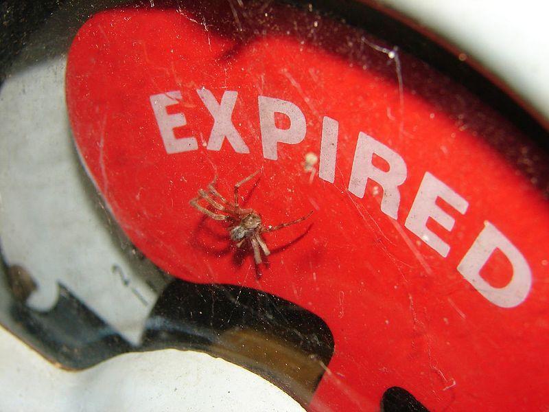 File:Expired spider (322980012).jpg