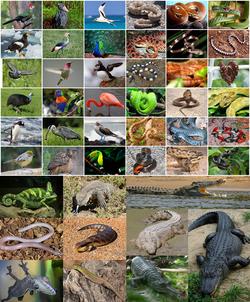 טבלת מינים מקבוצת הזאורופסידה