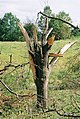 FEMA - 5121 - Photograph by Jocelyn Augustino taken on 09-25-2001 in Maryland.jpg