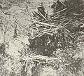 FMIB 41585 Nests of the Dogfish (Almia calva).jpeg