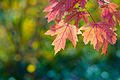 Fall, sun, leaves, and bokeh! (6321333937).jpg