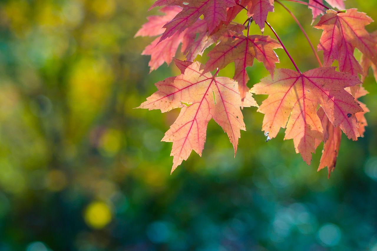 filefall sun leaves and bokeh 6321333937jpg