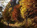 Farby sulinských stromov - panoramio.jpg
