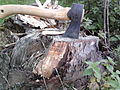 Fatwood Stump.jpg