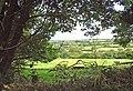Fields and woodland near Blaen Cneifa, Clydau - geograph.org.uk - 935192.jpg