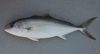 Fish4446 - Flickr - NOAA Photo Library.jpg