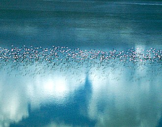 Lake Makgadikgadi - The Makgadikgadi Salt Pans in Botswana are one of the most important breeding sites in Southern Africa for lesser and greater flamingos