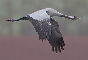 Σωλήνας 8 μεγάλο πουλί