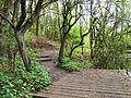 Flickr - ronsaunders47 - Birchwood Paths. Warrington Cheshire UK..jpg