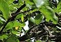 Flora from Parambikulam T R -001.jpg