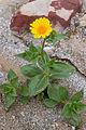Flower (3812563414).jpg