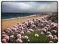 Flowers in the Sea.jpg