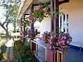 Flowers pots in cottage,kotagiri,tamilnadu - panoramio.jpg