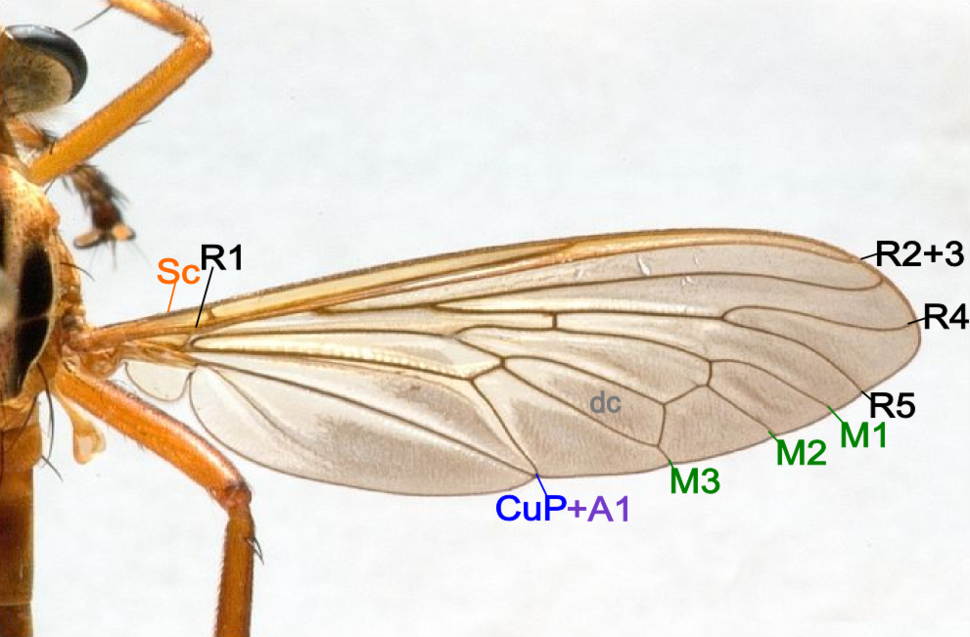 Fly wing structure
