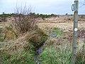 Footpath, Holt Heath - geograph.org.uk - 1589557.jpg