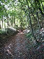 Footpath, The Beeches - geograph.org.uk - 1521116.jpg