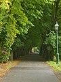 Footpath in Miller Park - geograph.org.uk - 1476508.jpg