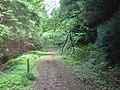 Footpath junction on forest road in Graig Wood - geograph.org.uk - 493337.jpg