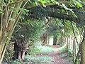 Footpath on Clandon Downs - geograph.org.uk - 992331.jpg